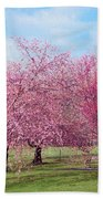 Branch Brook Cherry Blossoms Beach Towel