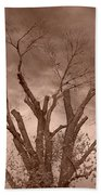 Branches Against Sepia Sky H   Beach Towel