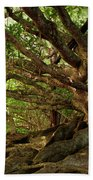 Branches And Roots Beach Towel by James Eddy