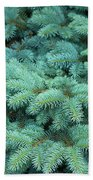 Branches Of Blue Spruce Beach Towel