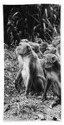 Brazil: Monkeys Beach Towel