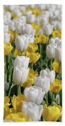 Breathtaking Field Of Blooming Yellow And White Tulips Beach Towel