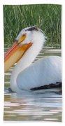 Breeding American White Pelican On Lower Sunshine Beach Towel