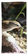 Breswick Wren On Tree Root 2 Beach Towel