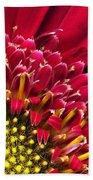 Bright Red Gerbera Daisy Beach Towel