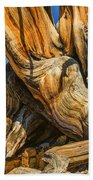 Bristle Cone Pine Tree White Mtns Ca Color Img 6799 Beach Towel