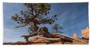 Bristle Cone Tree Beach Sheet