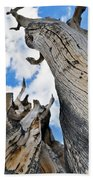 Bristlecone Great Basin Portrait Beach Towel