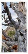 Bristlecone Pine Nevada Beach Towel by Kyle Hanson