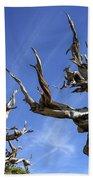 Bristlecone Trees Beach Towel