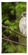 Broad Winged Hawk On The Lookout Beach Towel