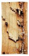Broken Old Stump Spruce Beach Towel
