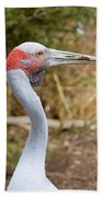 Brolga Profile Beach Towel