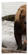 Brown Bear Eating Salmon Tail Beside Rocks Beach Towel
