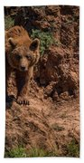 Brown Bear Watches From Steep Rocky Outcrop Beach Towel