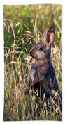 Brown Bunny Beach Towel