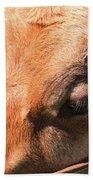 Brown Cow 2 Beach Towel