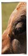 Brown Cow With Vignette Beach Towel