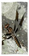 Brown Dragonfly  Beach Towel