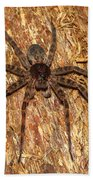Brown Fishing Spider Beach Towel