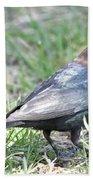 Brown-headed Cowbird 2 Beach Towel