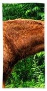 Brown Horse In High Definition Beach Towel