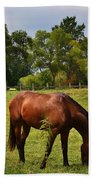 Brown Horse In Holland Beach Towel