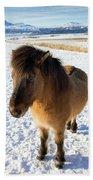 Brown Icelandic Horse In Winter In Iceland Beach Towel