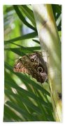Brown Morpho Butterfly Resting On A Sunny Tree  Beach Towel