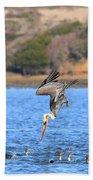 Brown Pelican Diving Beach Towel