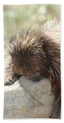 Brown Porcupine On A Fallen Log Beach Towel