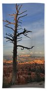 Bryce Canyon Dead Tree Sunset 3 Beach Towel