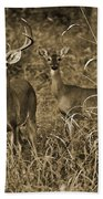Buck And Doe In Sepia Beach Towel