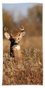 Buck In The Weeds Beach Towel