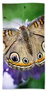 Buckeye Butterfly  Beach Towel