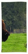 Buffalo In Spring Grass Beach Towel