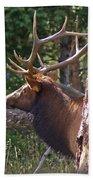 Bull Elk 2 Beach Towel