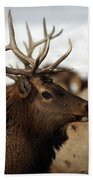 Bull Elk At Hardware Ranch Beach Towel