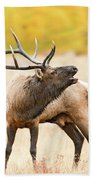 Bull Elk Bugling In The Fall Beach Towel