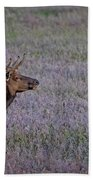 Bull Elk In Velvet Beach Towel