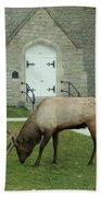 Bull Elk On The Church Lawn Beach Towel