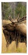 Bull Elk Sideview Beach Towel
