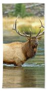 Bull Elk Wading The Madison River Beach Towel