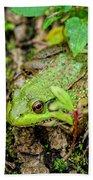 Bull Frog On A Log Beach Towel