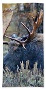 Bull Moose 02 Beach Towel