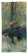 Bull Moose In The Evening Beach Towel