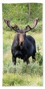 Bull Moose Stands Guard Beach Towel