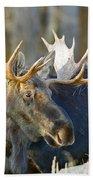 Bull Moose Up Close Beach Towel