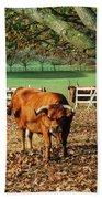 Bull Beach Sheet
