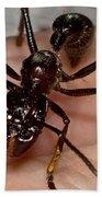Bullet Ant On Hand Beach Towel